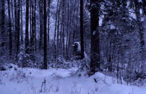 ロシアの森 中にいるのは熊?