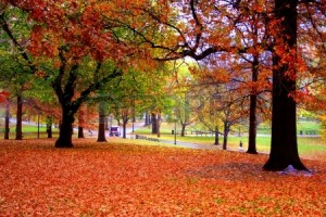 2783921-秋の紅葉のボストン-パブリック-ガーデンでストック画像[1]