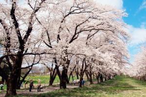 title-img-season-spring