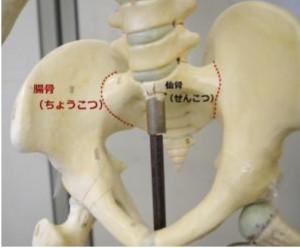 腸骨耳状面